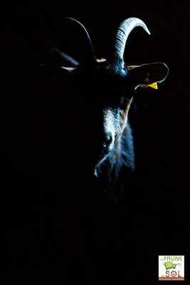 photo numérisée par le photographe Philippe à Tassin-la-demi-lune